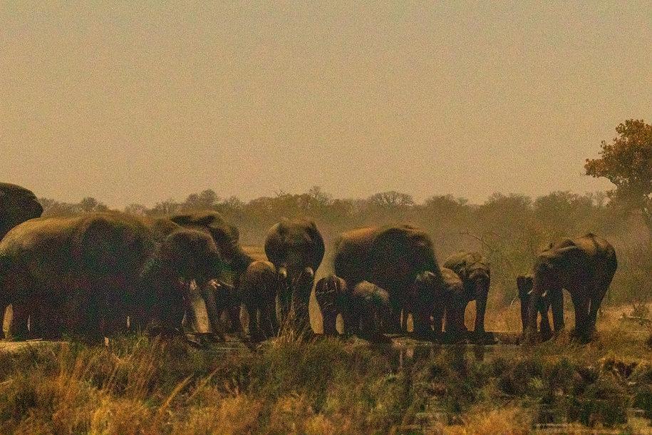 Elephantswaterhole2.jpg