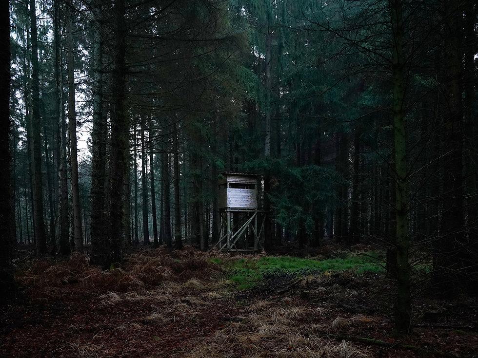 Waldcharakter 1