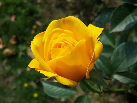 Volunteers Needed – Scorer & Gardner / Flower Arrangements