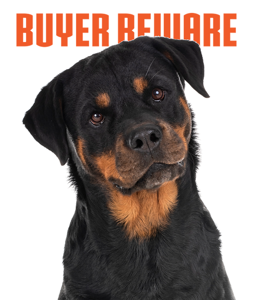 rottweiler2_edited.png