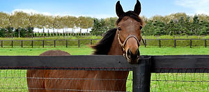 rb-homepage-equine-athletes-course-1-120