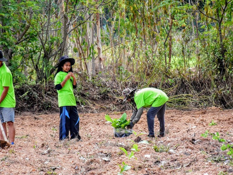 Planting trees in Thailand (Surin) for Onetreeplanted.org