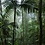 Thumbnail: Grow your own microforest