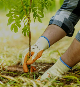 Planting trees_cropped.jpg