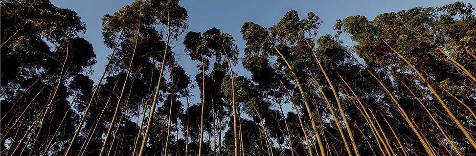 Rainforest 40%.jpg