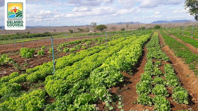 Delmiro Gouveia será contemplado com 41 projetos para agricultura familiar do Canal do Sertão