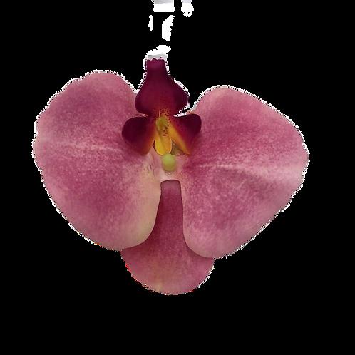 Argola de Guardanapo Orquídea