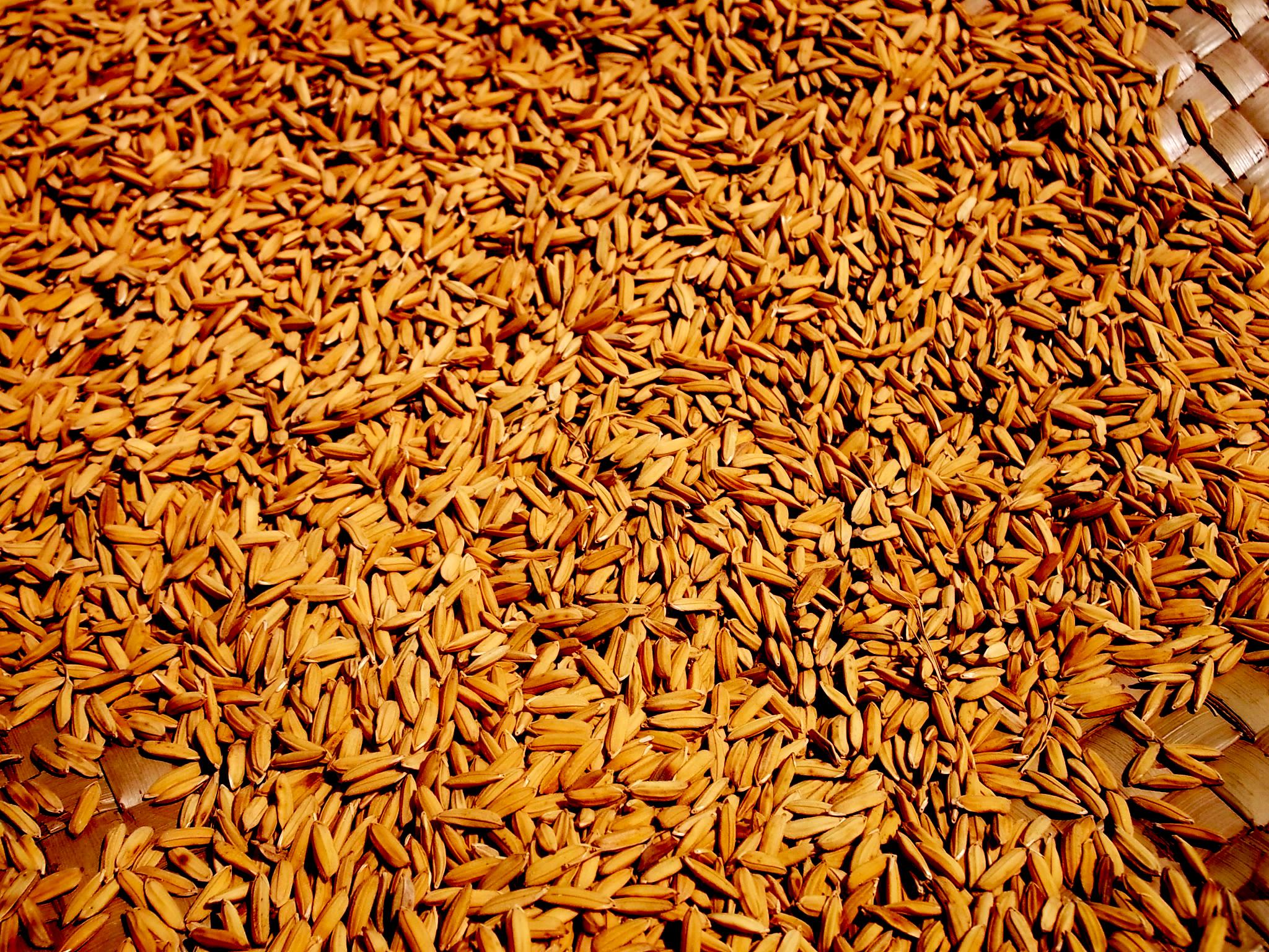 Bario Rice