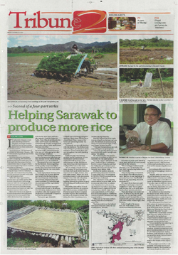 Helping Sarawak to produce more rice