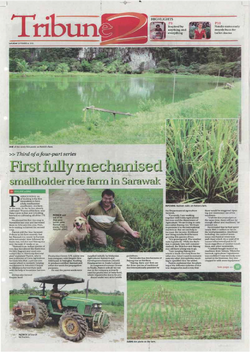 First fully mechanised smallholder rice farm in Sarawak