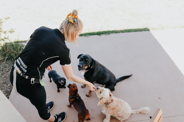 Pawz & Me Pet Services