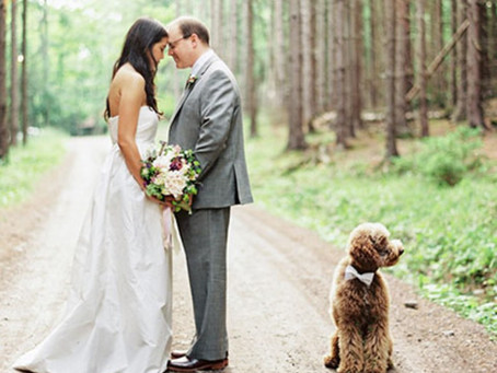 Here Comes The Bride (And Her Dog!)