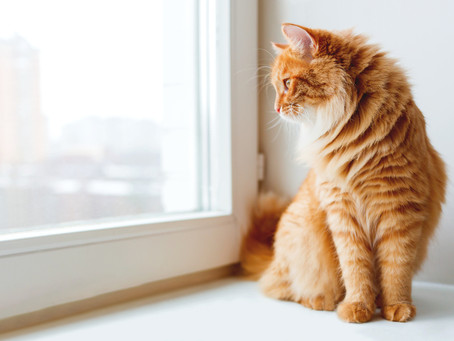 Why Your Cat Is Best Kept Inside