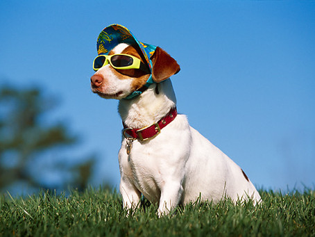 The Importance of Sun Safety for Dogs