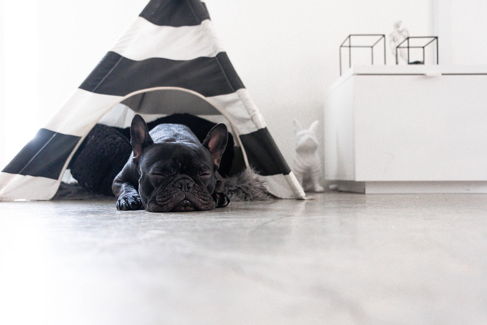 French Bulldog is asleep in pet teepee