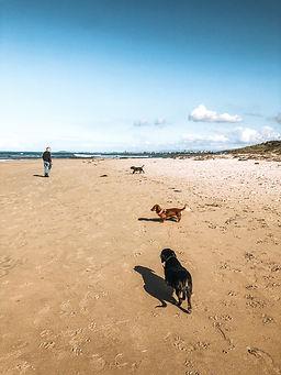 Pawz & Me's Beach Adventures