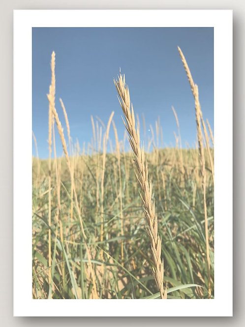 In the Reeds No.2