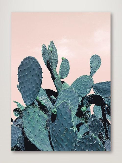 Cactus Raquettes