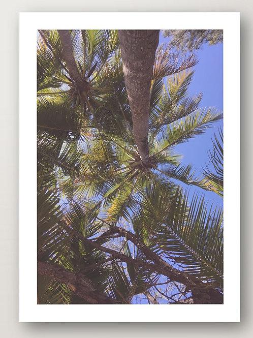Palms No. 2