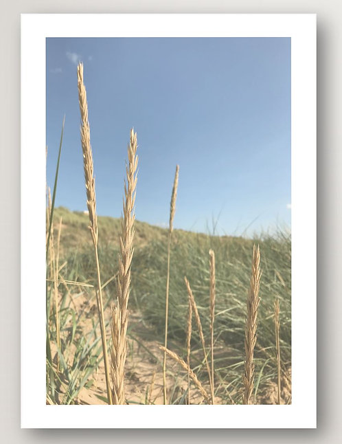 In the Reeds No.1