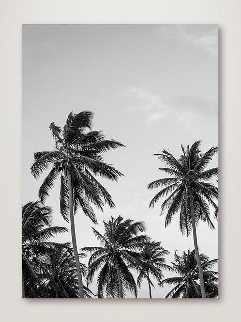 Palms in Grey