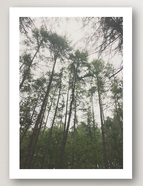 Forest View No.1