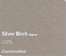 Silver Birch - C3710