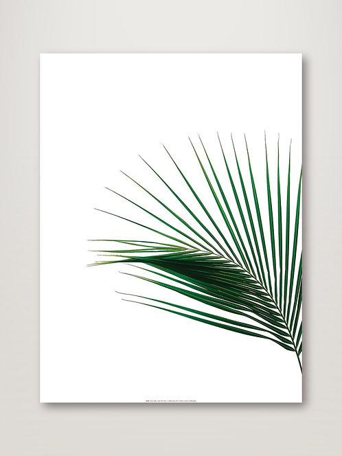 Green Palm Tree II
