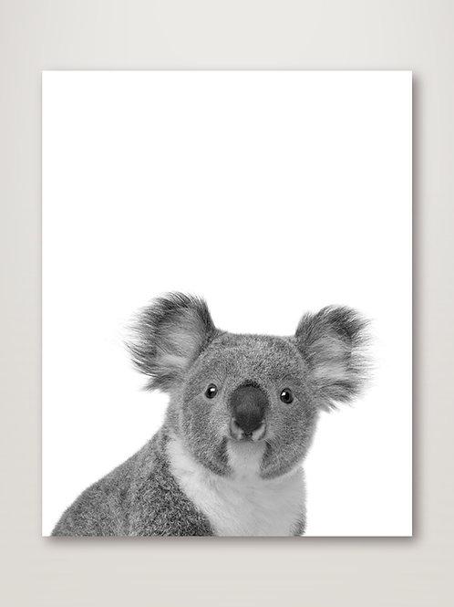 Koala Rigolo