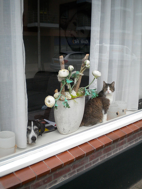 Chantal Rens - Cats and Dogs in the Window #3