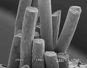 Scanning Electron Microscopy.JPG