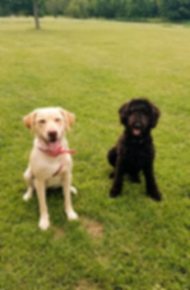 Tilly and Willow