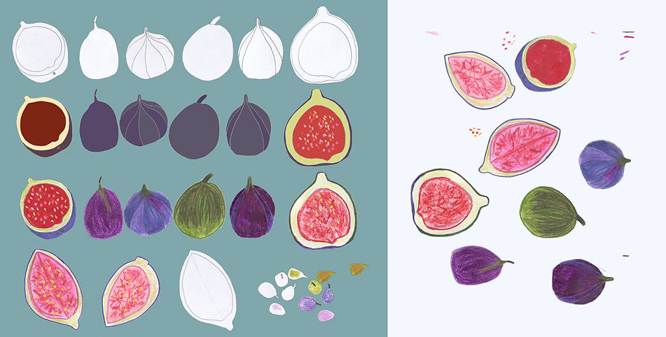 Figs illustration drawn colored hand drawn digital color pencil by Azita Houshiar