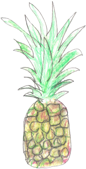 Drawing of pineapple illustration by Azita Houshiar