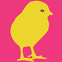 Yellow golden Chick | Illustration digital