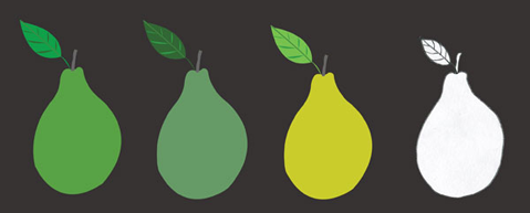 Pears Illustration hand drawn color digital by Azita Houshiar