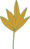 Leaf hand drawn digital color illustration