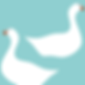 Swans swimming | Illustration digital