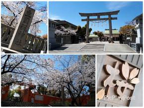 お花見🌸🍺🌸桜満開