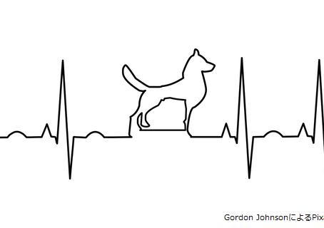 東洋医学から見る⑭心臓と食餌の好み