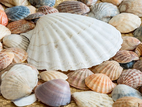古来から伝わる貝殻の不思議な力~ホタテ焼成パウダーの使い方
