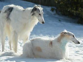 犬の麻酔リスクと遺伝子の関係