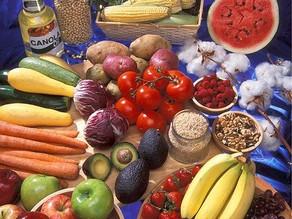 動物とヒトの薬剤耐性菌②~遺伝子組み換え食品に含まれる耐性菌