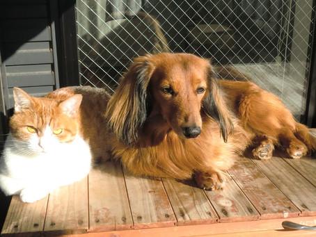 兄(犬)と妹(猫)の同調性