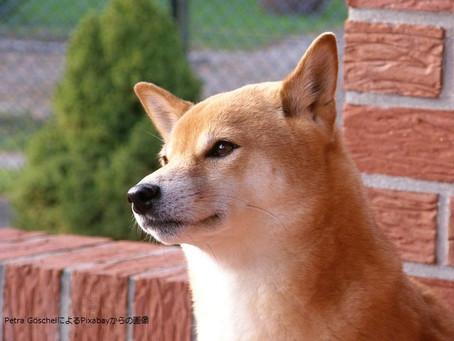 天然記念物への道①~日本犬誕生