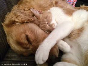 油断大敵!Q熱・猫ひっかき病などペットからうつる感染症