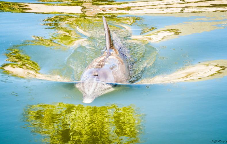 Dolphin -2-5.jpg
