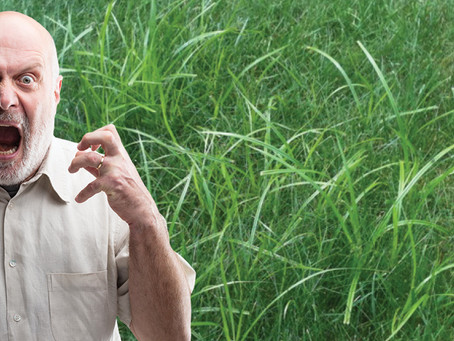 Nutgrass (Cyperus rotundus) - The weed that drives the world nuts!