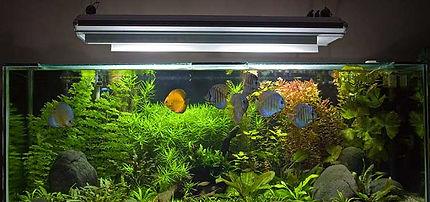 378_the_skeptical_fishkeeper_aquarium_lighting.jpg