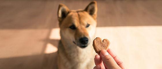 Healthy-Dog-Treats.jpg